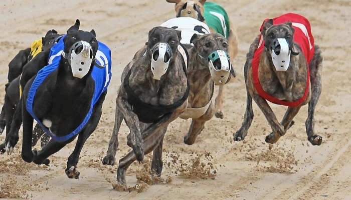 Shooters, Fishers, Farmers Party and Greyhound Racing