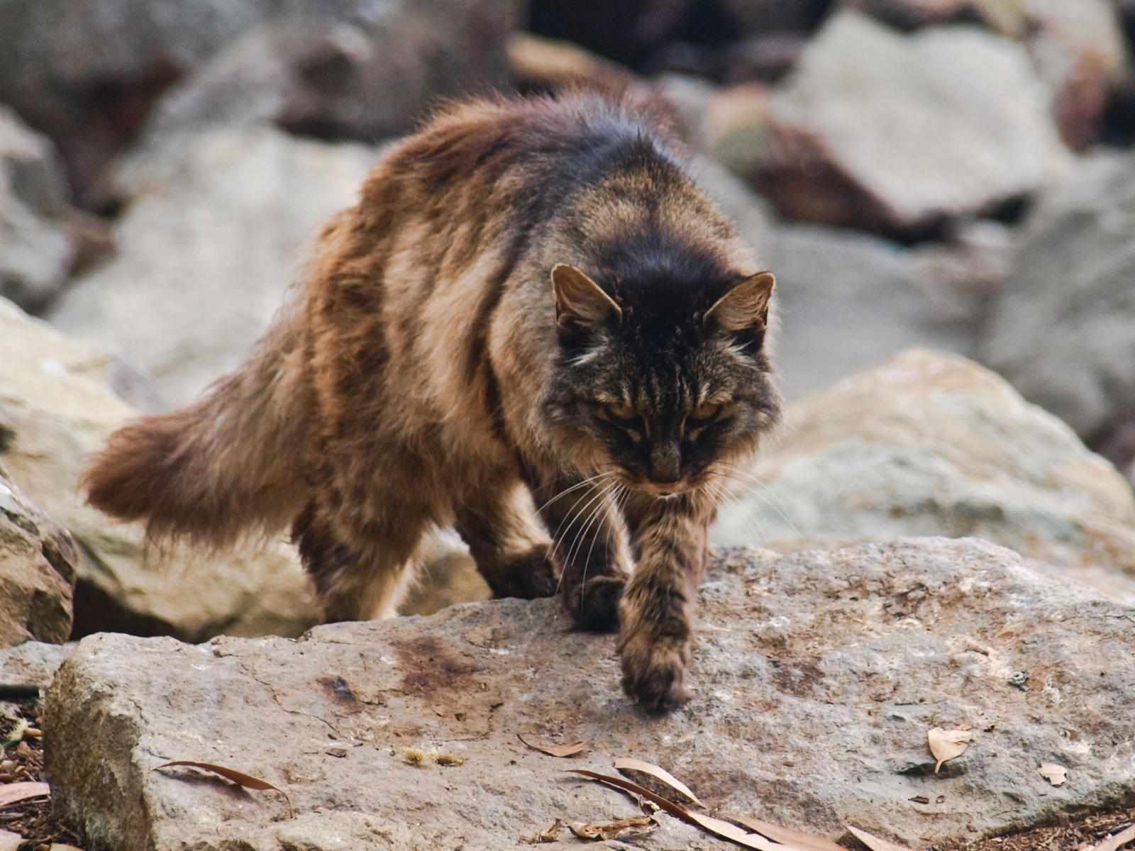 Government declares war on feral cats