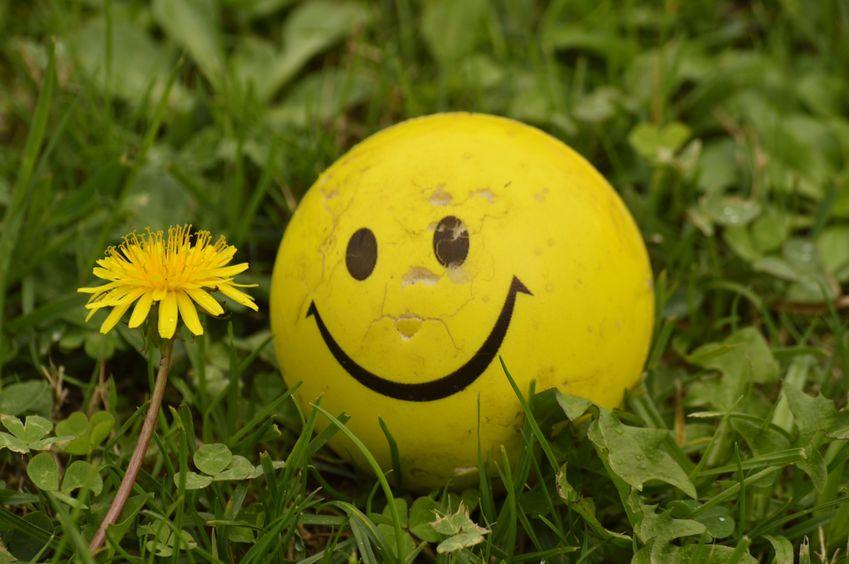 Are Kiwis happier than Aussies?