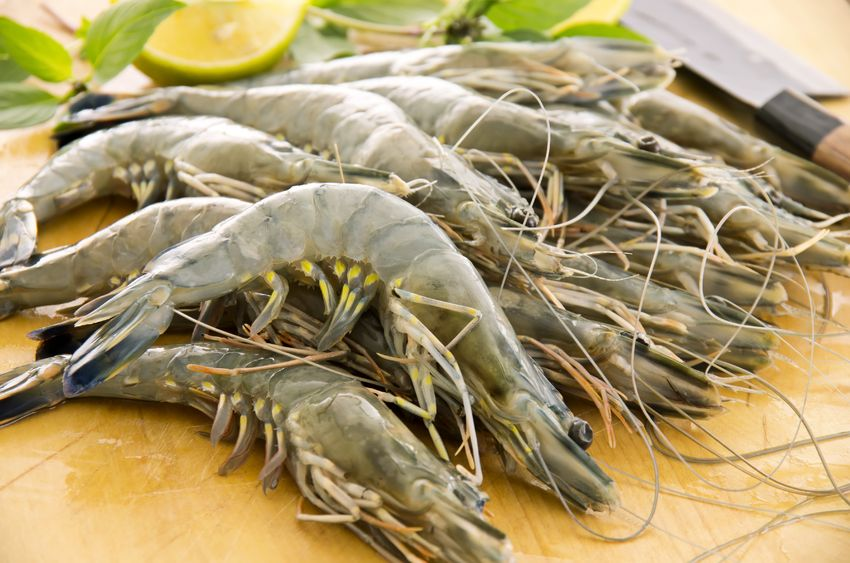 90% drop in Seafood sales due to White Spot Disease