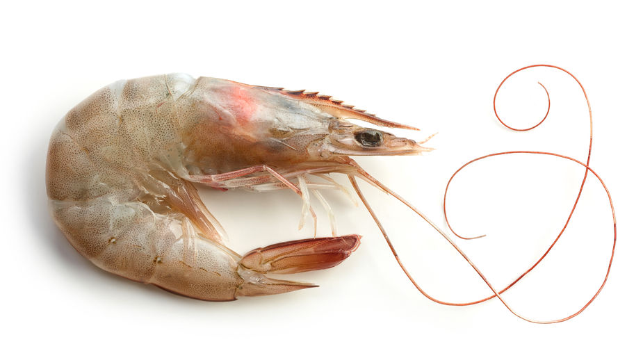 Prawns for Easter?