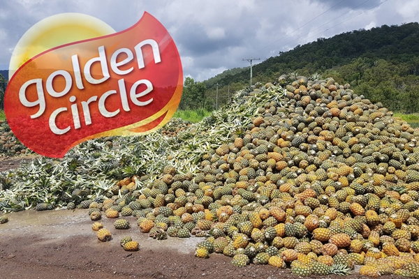 Tonnes of Aussie pineapples wasted due to factory closure