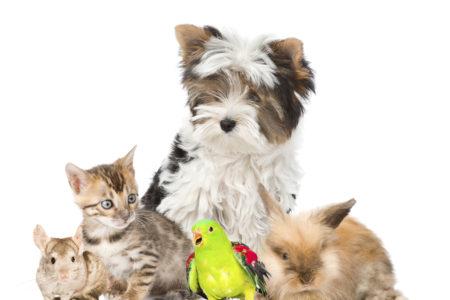 RSPCA slashes adoption costs to $29