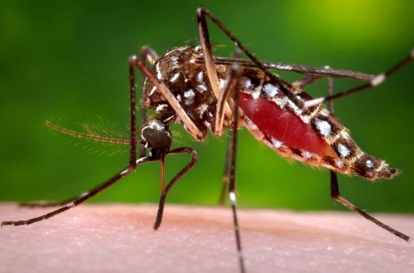 Mosquito season hits late