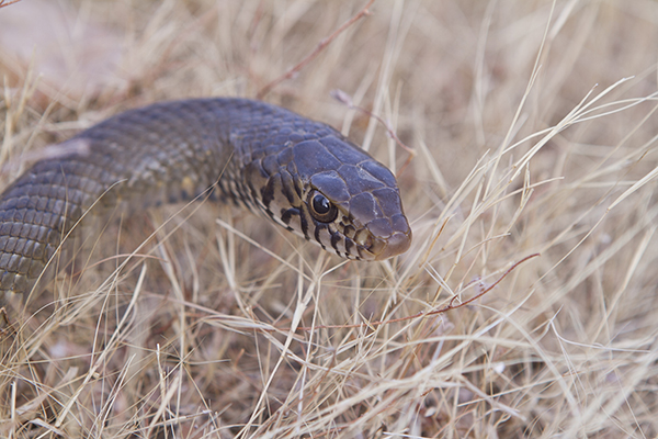 Article image for QLD man dies after being bitten by snake