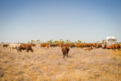 Farming crisis worsens: '90% of NSW effectively in drought'