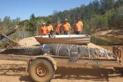 Croc handler says 4.7m 'monster' crocodile shouldn't lead to culls