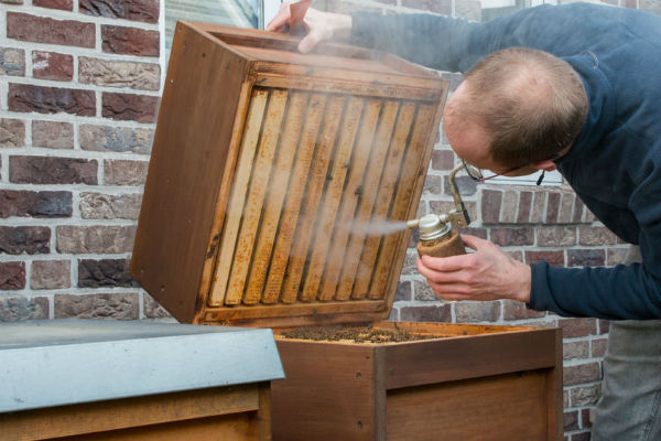 Urban apiarist sets Brisbane suburb abuzz