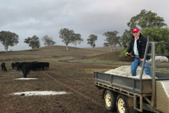 'I don't know what to do': Farmer can't stand watching his cattle starve to death