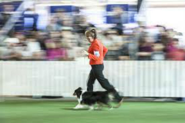 The Ekka goes to the dogs