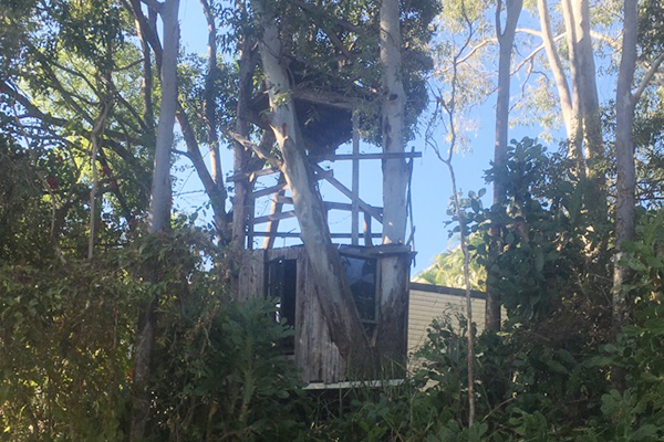 Article image for Greenslopes family fight to save beloved treehouse from Energex