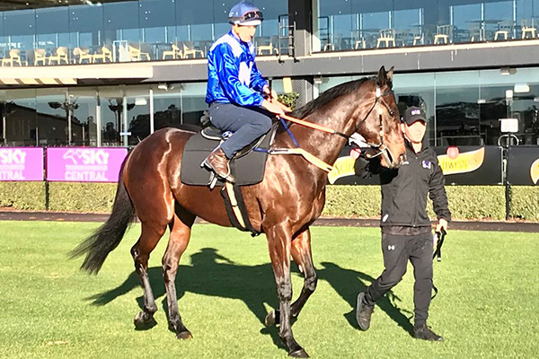 Article image for 'She's been spot on': Chris Waller confident Winx won't be beaten in milestone race