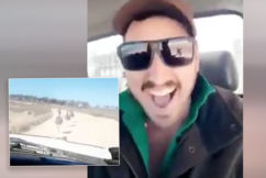 'It's appalling': RSPCA investigating after man is videoed laughing while mowing down emus