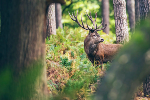 Petition takes aim at hunting in Qld state forests