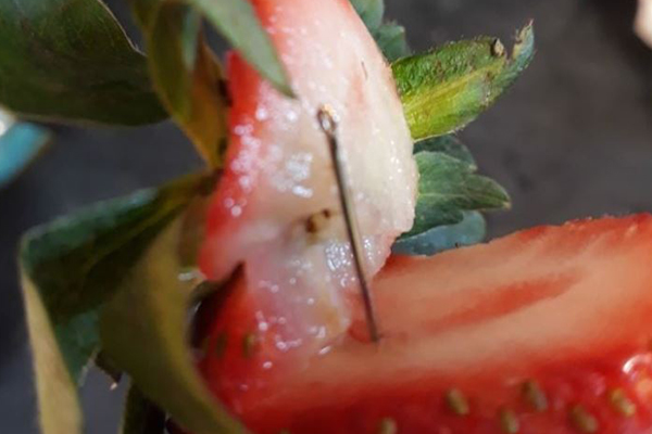 Article image for State government commits $1 million to help struggling strawberry farmers