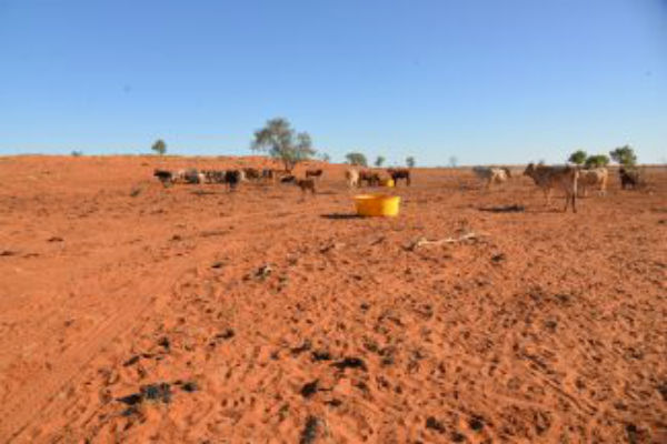Buy A Bale providing a lifeline to Qld farmers