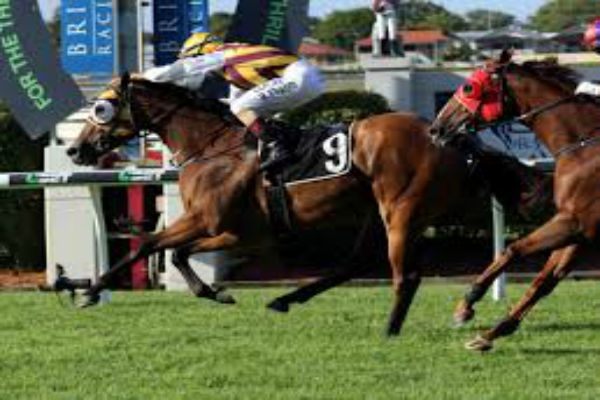 Qld racing industry threatens strike over betting tax