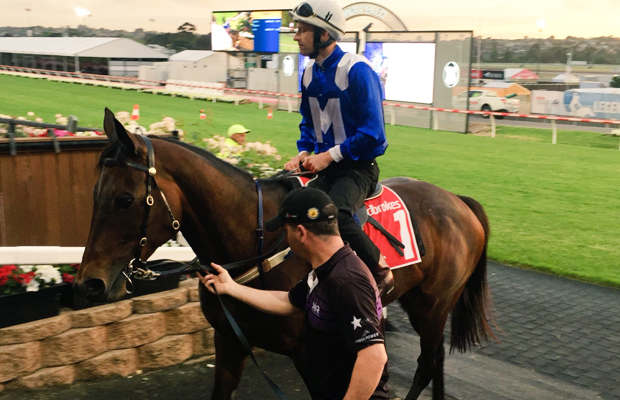 Hundreds flock to watch Winx tune up for historic Cox Plate