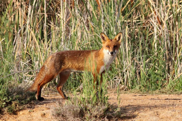 Feral animals take catastrophic toll on native wildlife