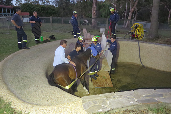 Article image for Firefighters rescue elderly horse trapped in swimming pool