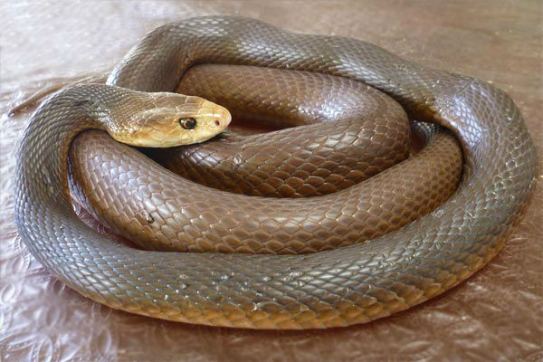 Warmer weather triggers early start to snake season
