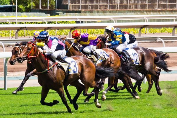 Article image for Jockey Kerrin McEvoy believes Cross Counter will race in next year's Melbourne Cup