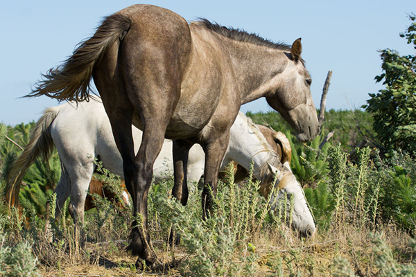 Article image for Chris Smith's pressure to stop brumby cull has worked… for now