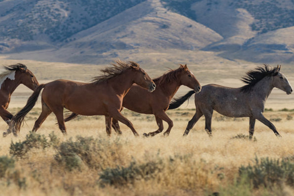 State MP calls on Minister to stop 'unacceptable' culling of wild brumbies