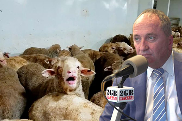 Article image for Barnaby Joyce calls out activists who allegedly paid to see animal cruelty