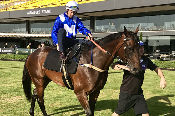 She's back! Chris Waller chats following Winx's return to the track