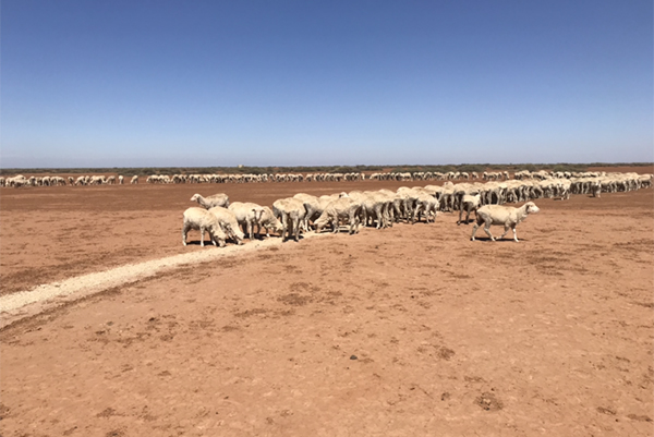 'We're in trouble': Drought-stricken farmers say more assistance is needed
