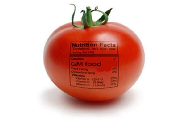 Nothing to fear from GMO food