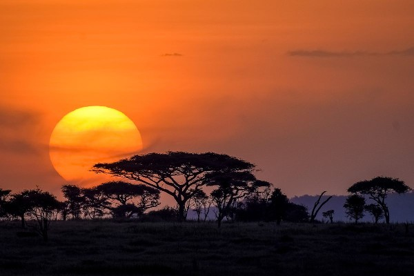 As sure as Kilimanjaro rises like Olympus above the Serengeti
