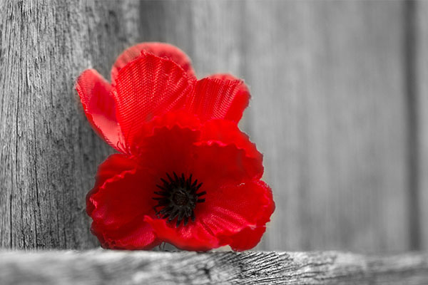 Article image for Lest we forget: Family members remember their veterans