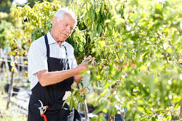 Article image for Tourism industry wants baby boomers put to work