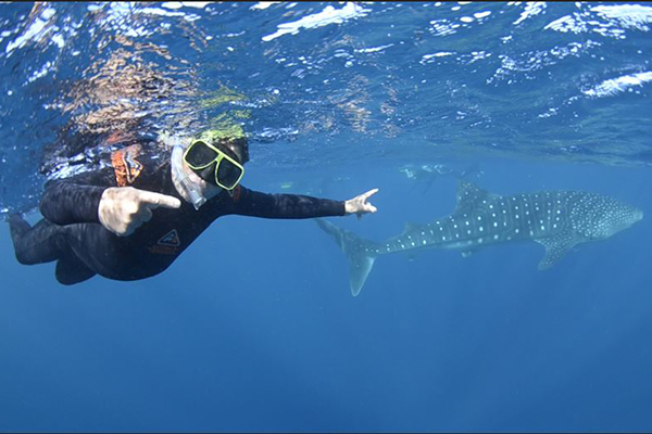 Article image for Steve Price swims with the world's largest fish