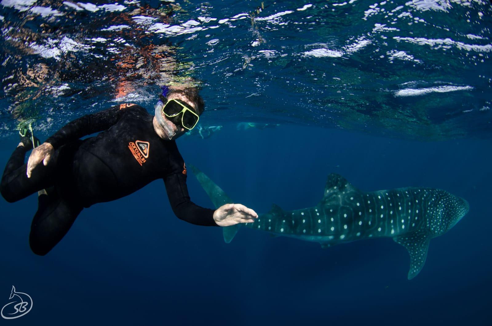 whaleshark 3