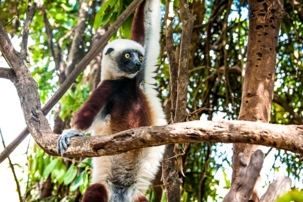 Madagascar, more than just lovable Lemurs