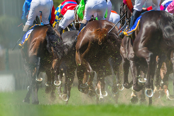 Article image for Jockey dead after tragic accident