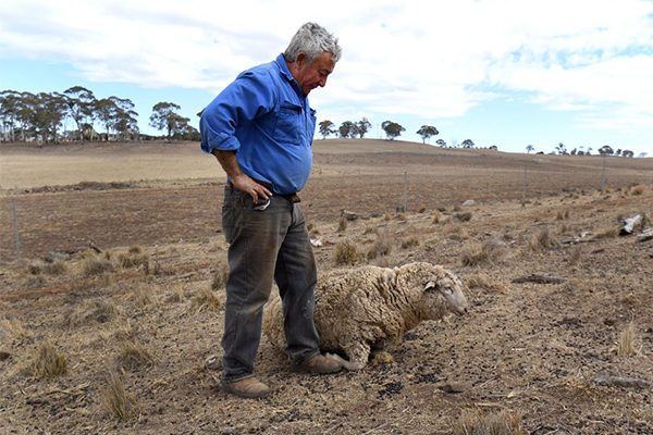 'Communities are on their knees': Farmers livid at QLD government's $250m stunt