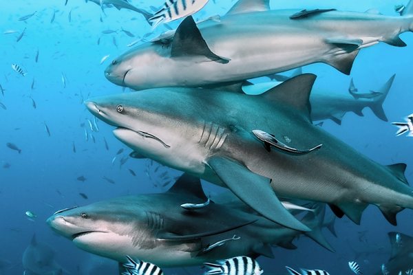 Article image for Inaction on shark control jeopardises north Queensland tourism