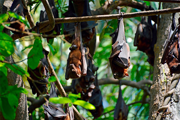 Family held hostage in their own home due to bat plague