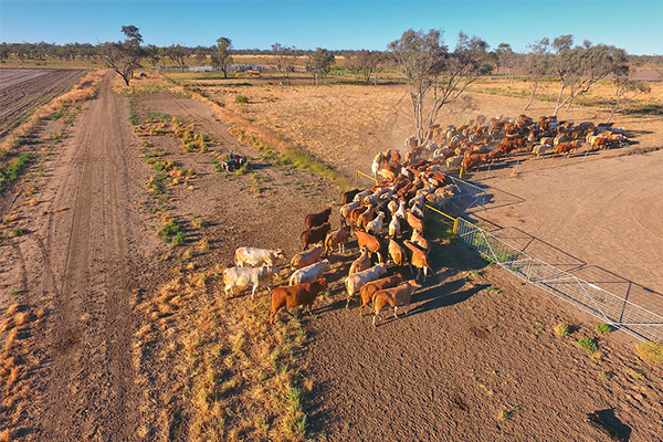Farming body calls for national approach to drought