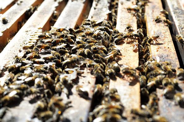 Article image for The importance of bees