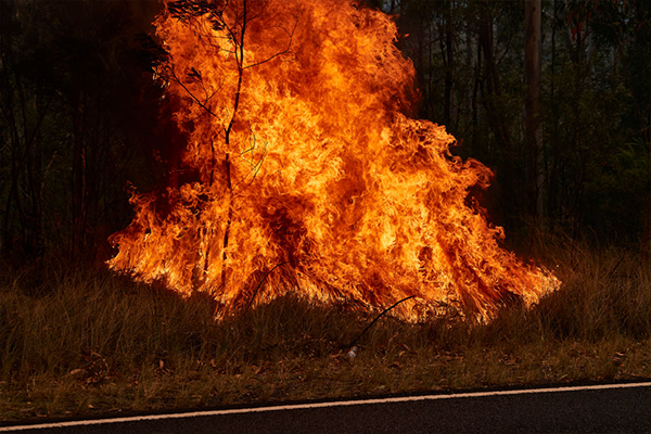 'This is a form of domestic terrorism': Deliberately lit fires risking life and property