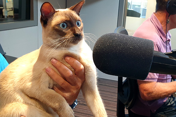 Article image for Award-winning cat Gus joins John Stanley at the mic