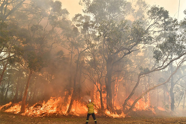 Article image for Dishonest Aussies rorting disaster relief payments meant for bushfire victims