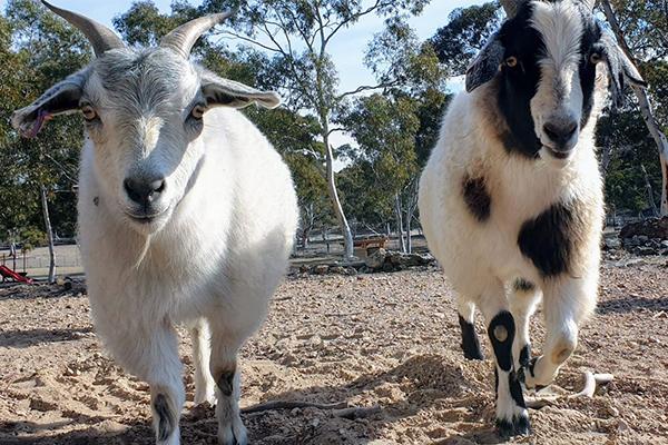 Generous 4BC listeners help desperate animal sanctuary through bushfire chaos
