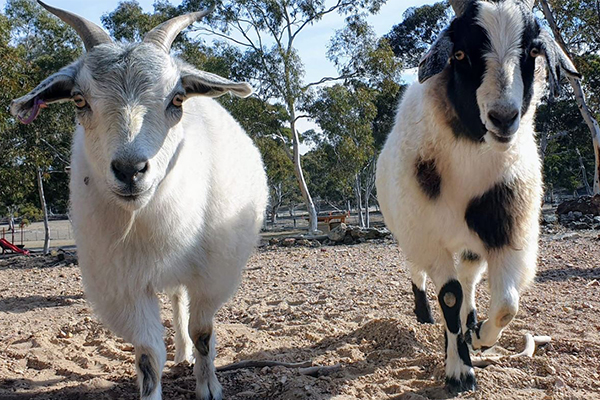 Article image for Generous 4BC listeners help desperate animal sanctuary through bushfire chaos