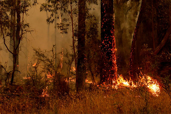 Climate change protest planned amid devastating bushfires